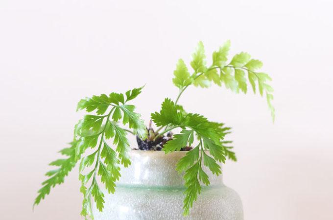 best plants for home office desk