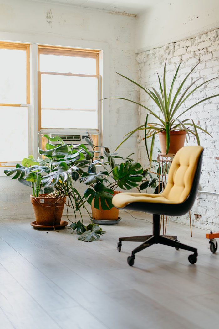 plants in modern private office